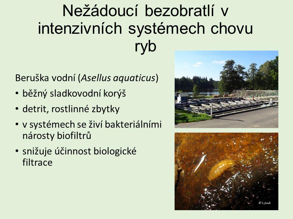 Nežádoucí bezobratlí v intenzivních systémech chovu ryb Beruška vodní (Asellus aquaticus) běžný sladkovodní korýš detrit, rostlinné zbytky v systémech