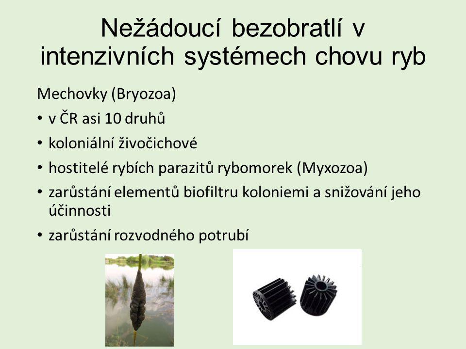 Nežádoucí bezobratlí v intenzivních systémech chovu ryb Mechovky (Bryozoa) v ČR asi 10 druhů koloniální živočichové hostitelé rybích parazitů rybomorek (Myxozoa) zarůstání elementů biofiltru koloniemi a snižování jeho účinnosti zarůstání rozvodného potrubí