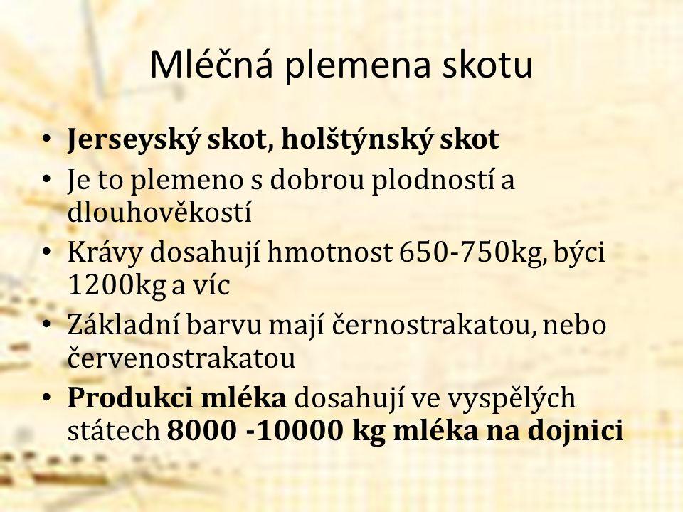 Mléčná plemena skotu Jerseyský skot, holštýnský skot Je to plemeno s dobrou plodností a dlouhověkostí Krávy dosahují hmotnost 650-750kg, býci 1200kg a víc Základní barvu mají černostrakatou, nebo červenostrakatou Produkci mléka dosahují ve vyspělých státech 8000 -10000 kg mléka na dojnici