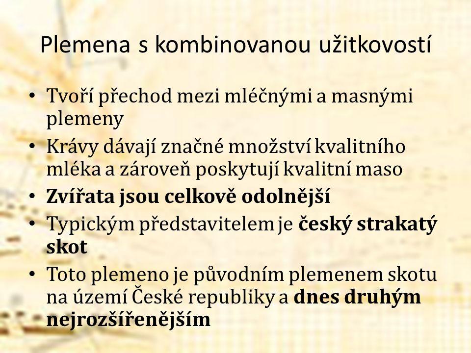 Český strakatý skot