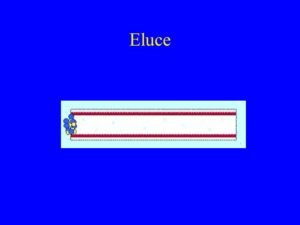 Eluce