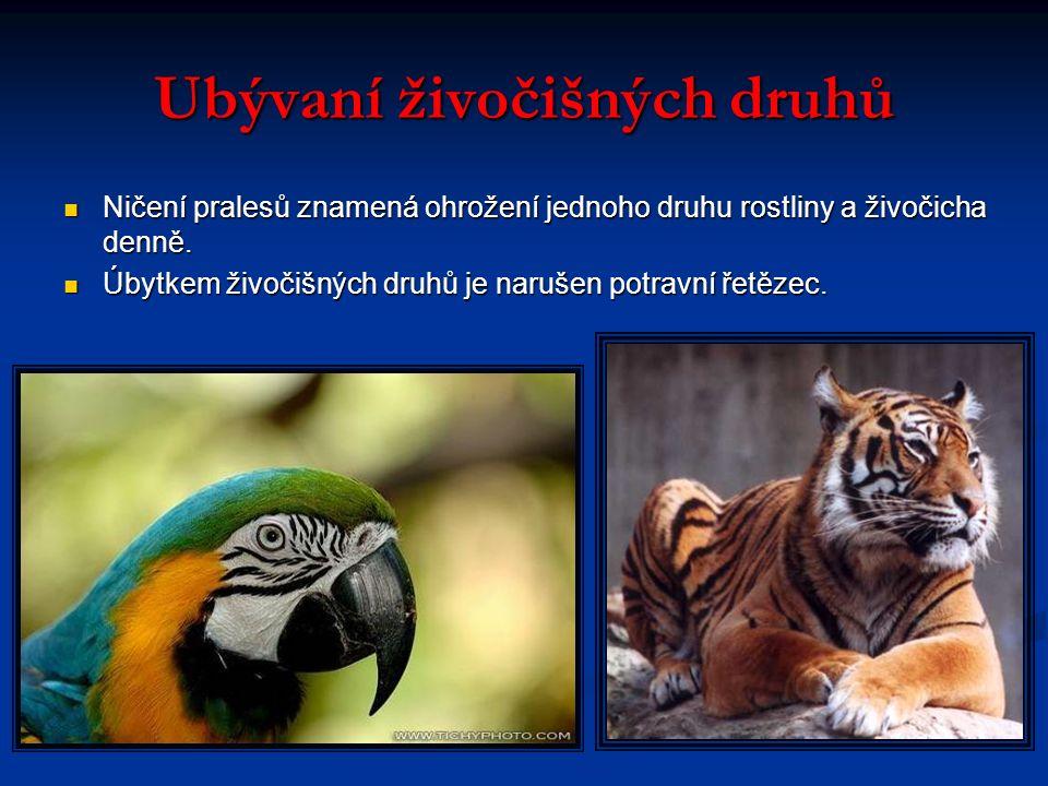 Ubývaní živočišných druhů Ničení pralesů znamená ohrožení jednoho druhu rostliny a živočicha denně.