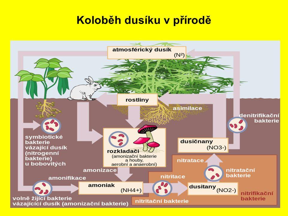 Koloběh dusíku v přírodě