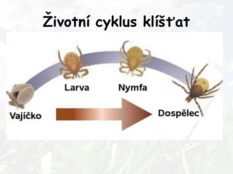Životní cyklus klíšťat