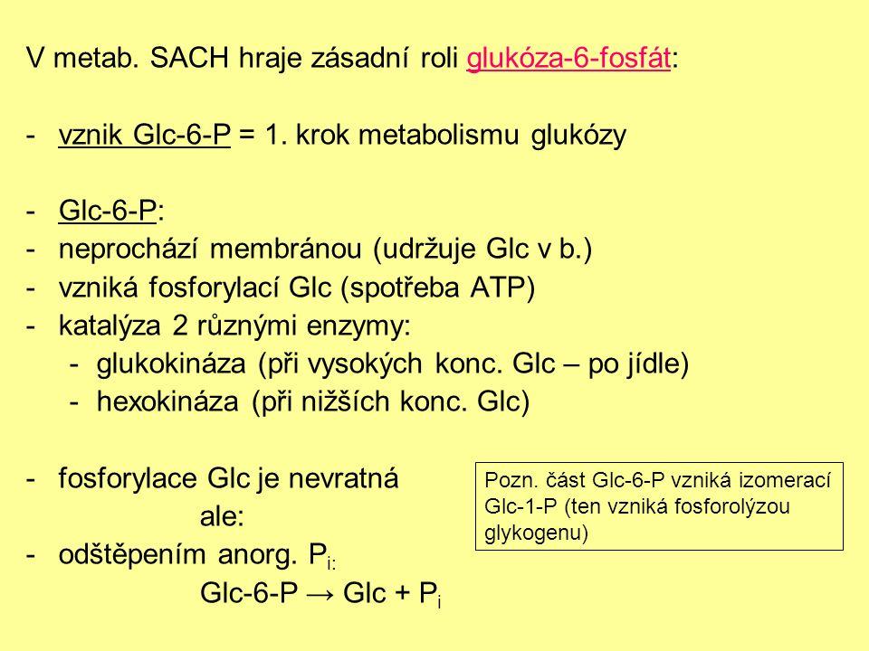 Obr. 4 Rozdíl v aktivitě hexokinázy a glukokinázy při různých koncentracích Glc