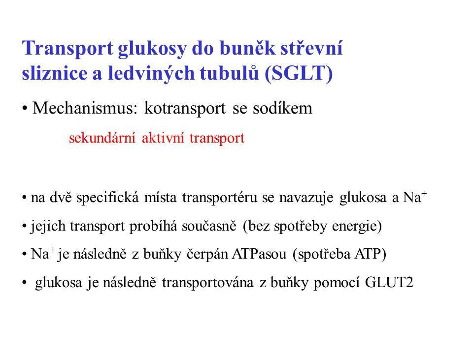 Transport glukosy do buněk střevní sliznice a ledviných tubulů (SGLT) Mechanismus: kotransport se sodíkem sekundární aktivní transport na dvě specifická místa transportéru se navazuje glukosa a Na + jejich transport probíhá současně (bez spotřeby energie) Na + je následně z buňky čerpán ATPasou (spotřeba ATP) glukosa je následně transportována z buňky pomocí GLUT2