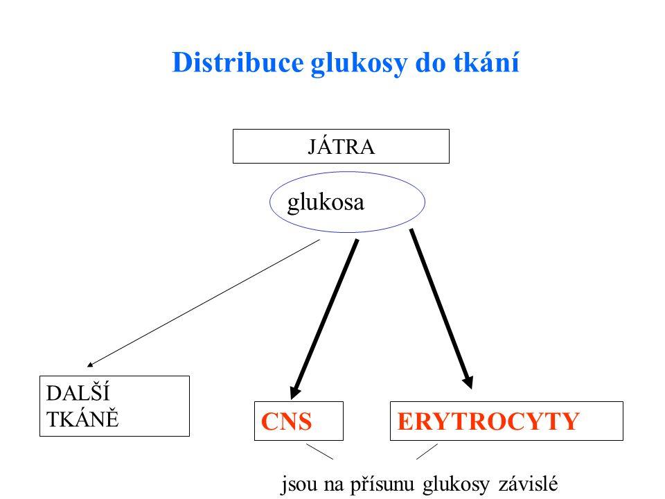 JÁTRA DALŠÍ TKÁNĚ CNSERYTROCYTY glukosa Distribuce glukosy do tkání jsou na přísunu glukosy závislé