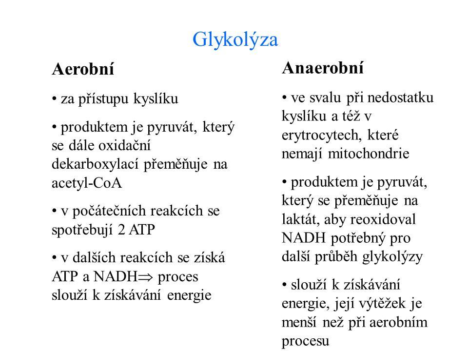 Aerobní za přístupu kyslíku produktem je pyruvát, který se dále oxidační dekarboxylací přeměňuje na acetyl-CoA v počátečních reakcích se spotřebují 2 ATP v dalších reakcích se získá ATP a NADH  proces slouží k získávání energie Anaerobní ve svalu při nedostatku kyslíku a též v erytrocytech, které nemají mitochondrie produktem je pyruvát, který se přeměňuje na laktát, aby reoxidoval NADH potřebný pro další průběh glykolýzy slouží k získávání energie, její výtěžek je menší než při aerobním procesu