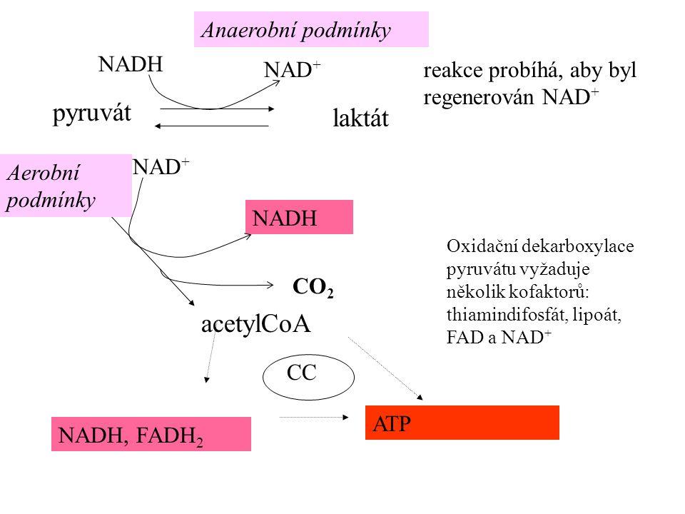 acetylCoA ATP NADH, FADH 2 laktát NADH Anaerobní podmínky Aerobní podmínky NADH CO 2 Oxidační dekarboxylace pyruvátu vyžaduje několik kofaktorů: thiamindifosfát, lipoát, FAD a NAD + NAD + CC reakce probíhá, aby byl regenerován NAD +
