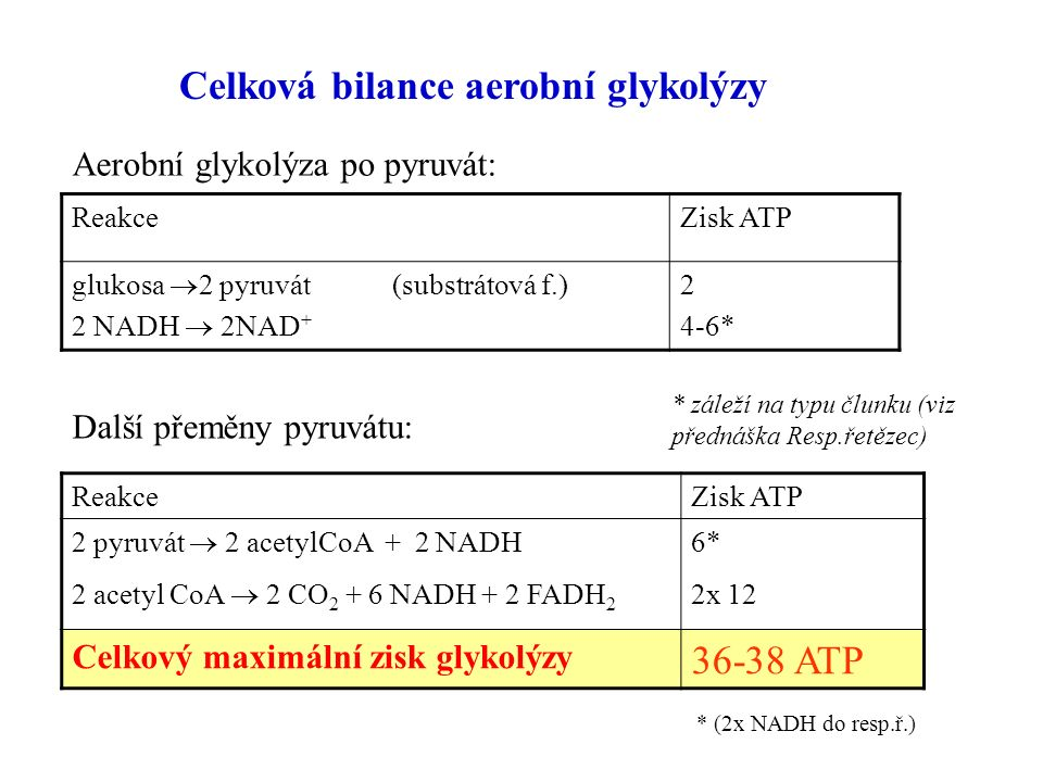 Celková bilance aerobní glykolýzy ReakceZisk ATP glukosa  2 pyruvát (substrátová f.) 2 NADH  2NAD + 2 4-6* Aerobní glykolýza po pyruvát: * záleží na typu člunku (viz přednáška Resp.řetězec) Další přeměny pyruvátu: ReakceZisk ATP 2 pyruvát  2 acetylCoA + 2 NADH 2 acetyl CoA  2 CO 2 + 6 NADH + 2 FADH 2 6* 2x 12 Celkový maximální zisk glykolýzy 36-38 ATP * (2x NADH do resp.ř.)