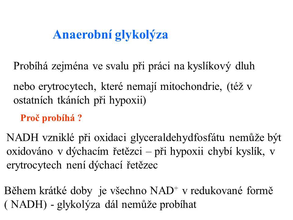 Anaerobní glykolýza Probíhá zejména ve svalu při práci na kyslíkový dluh nebo erytrocytech, které nemají mitochondrie, (též v ostatních tkáních při hypoxii) Proč probíhá .