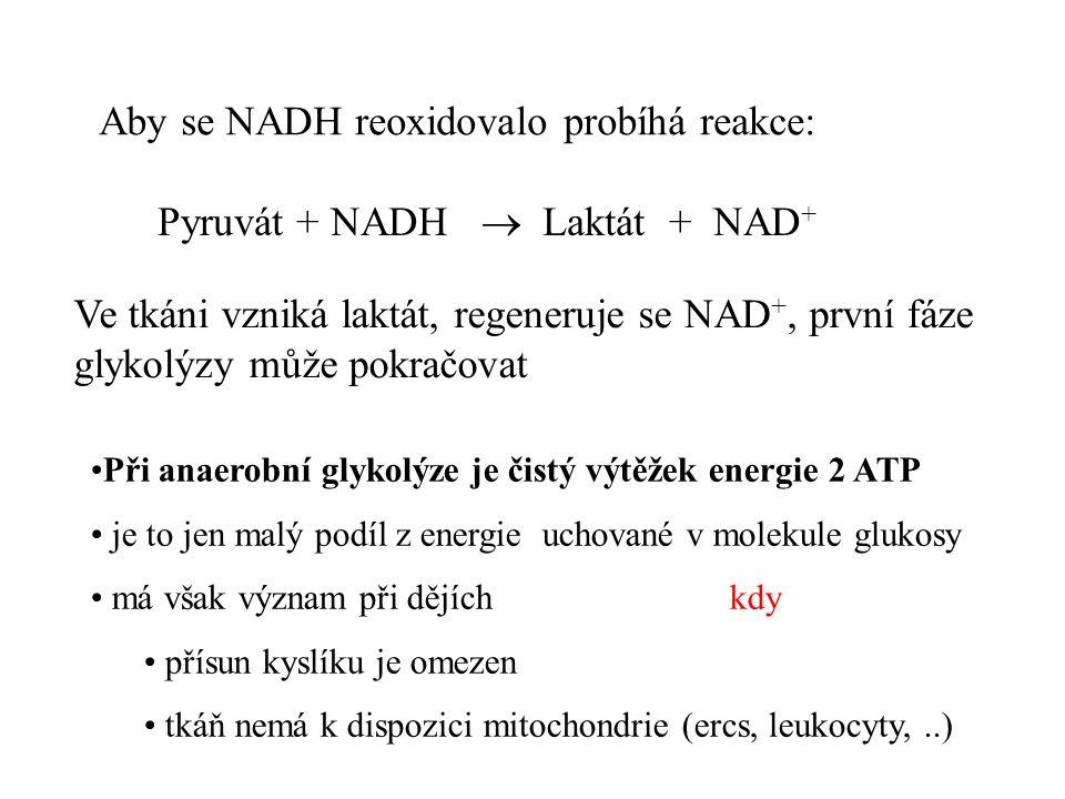Pyruvát + NADH  Laktát + NAD + Ve tkáni vzniká laktát, regeneruje se NAD +, první fáze glykolýzy může pokračovat Aby se NADH reoxidovalo probíhá reakce: Při anaerobní glykolýze je čistý výtěžek energie 2 ATP je to jen malý podíl z energie uchované v molekule glukosy má však význam při dějích kdy přísun kyslíku je omezen tkáň nemá k dispozici mitochondrie (ercs, leukocyty,..)