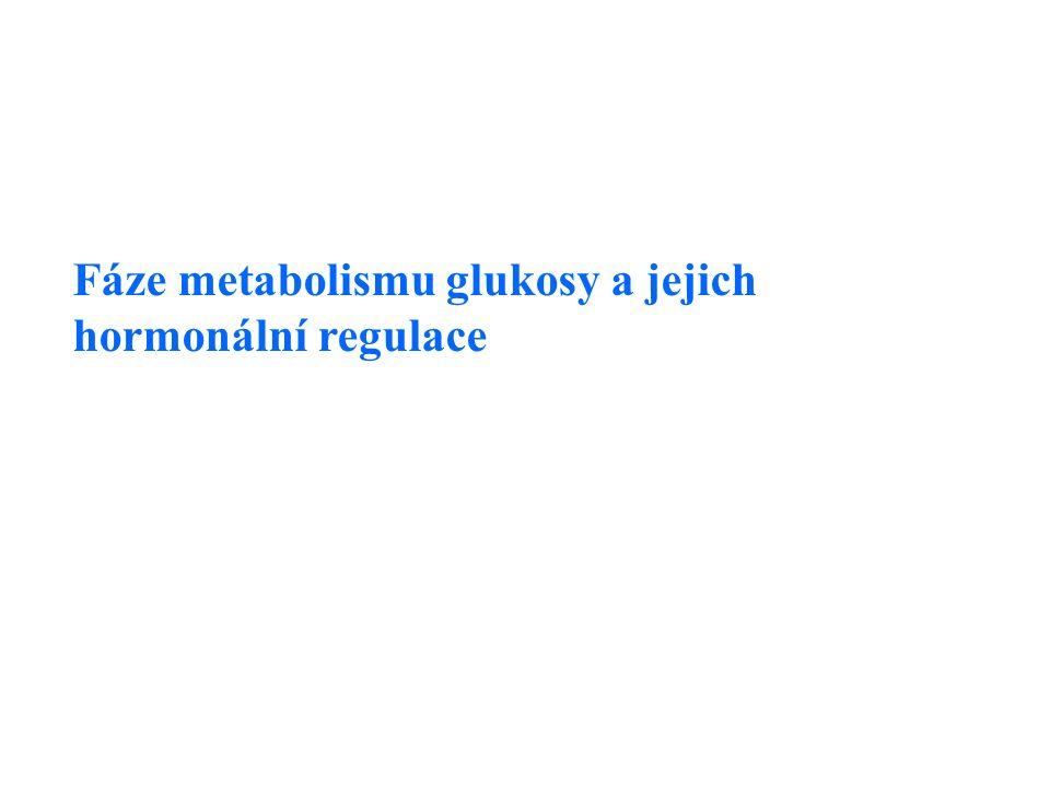 Fáze metabolismu glukosy a jejich hormonální regulace