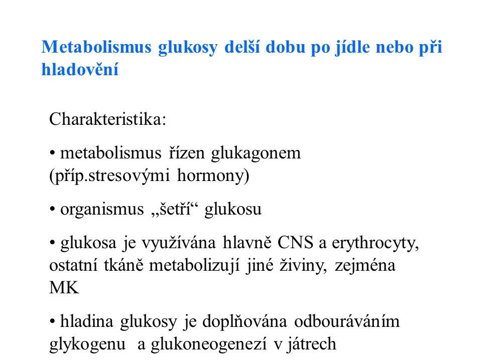"""Metabolismus glukosy delší dobu po jídle nebo při hladovění Charakteristika: metabolismus řízen glukagonem (příp.stresovými hormony) organismus """"šetří glukosu glukosa je využívána hlavně CNS a erythrocyty, ostatní tkáně metabolizují jiné živiny, zejména MK hladina glukosy je doplňována odbouráváním glykogenu a glukoneogenezí v játrech"""