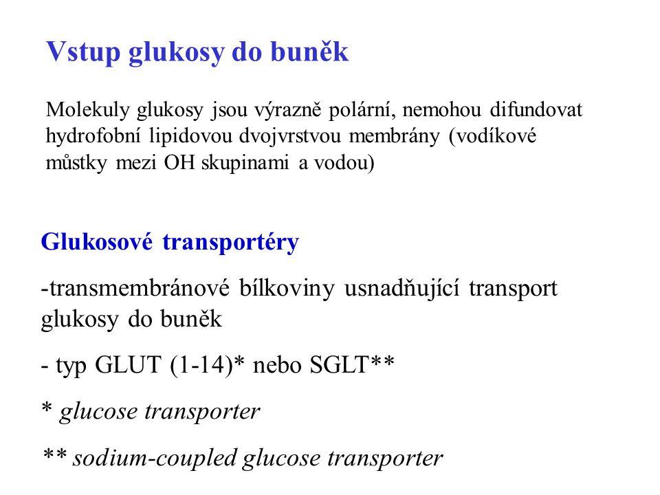 Vstup glukosy do buněk Glukosové transportéry -transmembránové bílkoviny usnadňující transport glukosy do buněk - typ GLUT (1-14)* nebo SGLT** * glucose transporter ** sodium-coupled glucose transporter Molekuly glukosy jsou výrazně polární, nemohou difundovat hydrofobní lipidovou dvojvrstvou membrány (vodíkové můstky mezi OH skupinami a vodou)