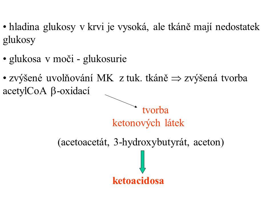 hladina glukosy v krvi je vysoká, ale tkáně mají nedostatek glukosy glukosa v moči - glukosurie zvýšené uvolňování MK z tuk.