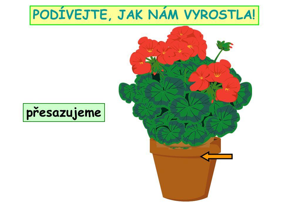 http://www.gify.nou.cz/pozadi3.htm http://maminkymaminkam.cz/basnicky-rikanky/hadanky/10-hadanky-od-maminek http://cs.wikipedia.org/wiki/Jedovat%C3%A9_pokojov%C3%A9_rostliny http://pixabay.com/cs/d%C5%AFm-st%C4%9Bna-tabulka-m%C3%ADstnost-k%C5%99eslo-43763/ http://www.gify.nou.cz/kvety1.htm http://www.gify.nou.cz/kvety2.htm http://cs.wikipedia.org/wiki/Soubor:Pelargonium_peltatum_hort._a1.jpg http://cs.wikipedia.org/wiki/Port%C3%A1l:Zem%C4%9Bd%C4%9Blstv%C3%AD http://www.gify.nou.cz/lid_zahradnik.htm http://office.microsoft.com/en-us/ obrázky z Galerie Q-draw http://cs.wikipedia.org/wiki/Soubor:Sansevieria_trifasciata_Leaf_Closeup_2448px.jpg http://cs.wikipedia.org/wiki/Soubor:Cliviaminiata.jpg http://cs.wikipedia.org/wiki/Soubor:Poinsettia_2.jpg http://cs.wikipedia.org/wiki/Soubor:Nerium_oleander2.jpg http://pixabay.com/cs/cyclamen-kv%C4%9Btina-r%C5%AF%C5%BEov%C3%BD- b%C3%ADl%C3%A1-fl%C3%B3ra-11290/ http://commons.wikimedia.org/wiki/File:Epipremnum_pinnatum_a2.jpg?uselang=cs http://commons.wikimedia.org/wiki/File:Dieffenbachia_bauseii_a1.jpg?uselang=cs http://cs.wikipedia.org/wiki/Soubor:Jardin_Botanico_de_Medellin-Azalea_(3).JPG http://pixabay.com/cs/zlat%C3%BD-m%C3%AD%C4%8D-kaktus-kaktus-59889/ http://cs.wikipedia.org/wiki/Soubor:Purple_African_Violet_Top.JPG http://pixabay.com/cs/rostliny-kv%C4%9Btina-kv%C4%9Btiny-25622/ http://pixabay.com/cs/dla%C5%88-konop%C3%AD-dlani-de%C5%A1tn%C3%ADk-dlani-7091/ http://pixabay.com/cs/orchidej-b%C3%ADl%C3%A1-kv%C4%9Btina-rostlin-53071/ http://www.gify.nou.cz/poz8.htm ZDROJE: