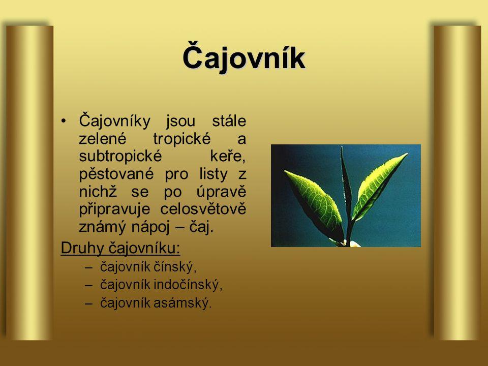 Čajovník Čajovníky jsou stále zelené tropické a subtropické keře, pěstované pro listy z nichž se po úpravě připravuje celosvětově známý nápoj – čaj.