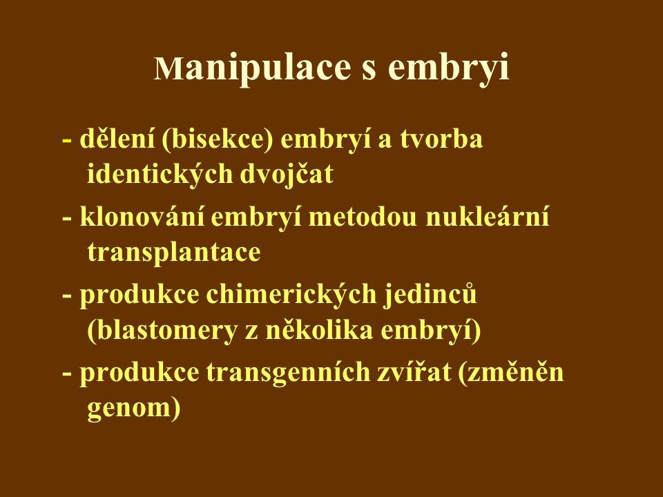M anipulace s embryi - dělení (bisekce) embryí a tvorba identických dvojčat - klonování embryí metodou nukleární transplantace - produkce chimerických jedinců (blastomery z několika embryí) - produkce transgenních zvířat (změněn genom)