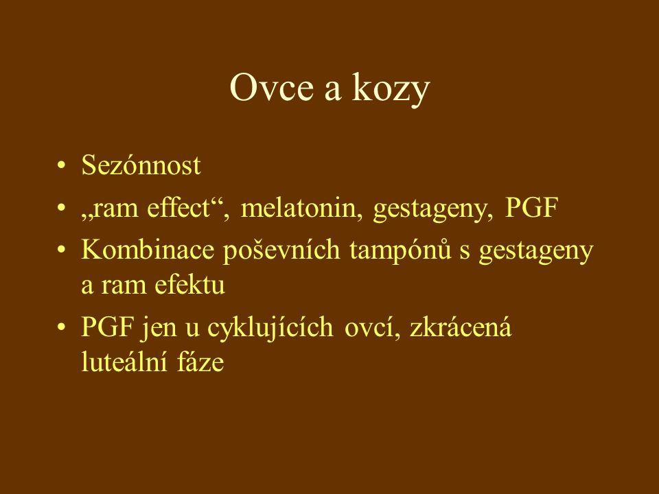 """Ovce a kozy Sezónnost """"ram effect , melatonin, gestageny, PGF Kombinace poševních tampónů s gestageny a ram efektu PGF jen u cyklujících ovcí, zkrácená luteální fáze"""