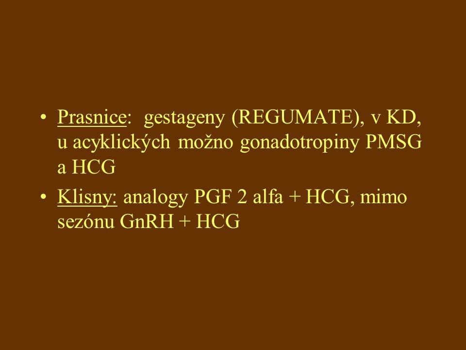 Prasnice: gestageny (REGUMATE), v KD, u acyklických možno gonadotropiny PMSG a HCG Klisny: analogy PGF 2 alfa + HCG, mimo sezónu GnRH + HCG
