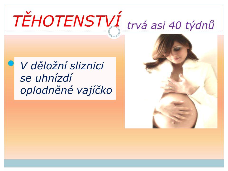 TĚHOTENSTVÍ V děložní sliznici se uhnízdí oplodněné vajíčko trvá asi 40 týdnů