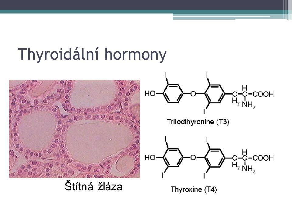 Thyroidální hormony Štítná žláza