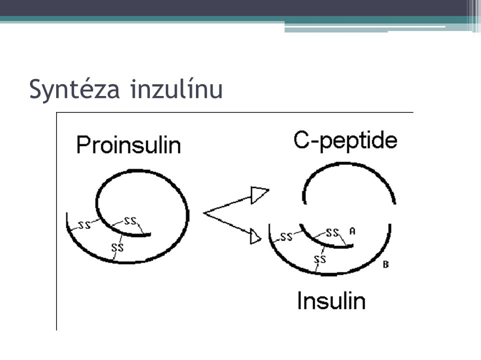 Syntéza inzulínu