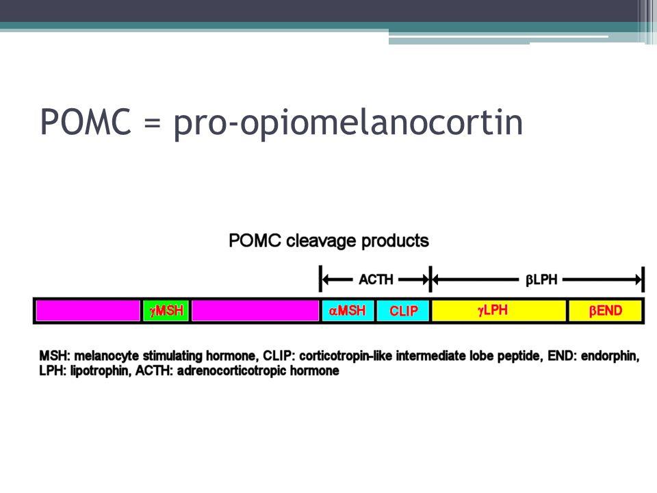 POMC = pro-opiomelanocortin