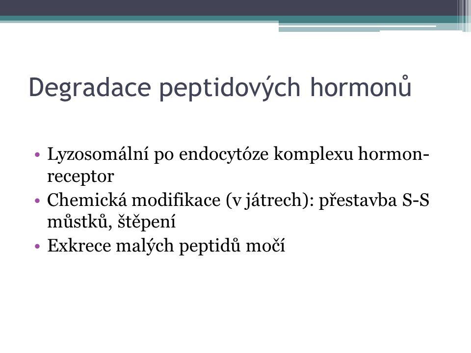 Degradace peptidových hormonů Lyzosomální po endocytóze komplexu hormon- receptor Chemická modifikace (v játrech): přestavba S-S můstků, štěpení Exkrece malých peptidů močí