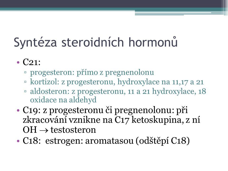 Syntéza steroidních hormonů C21: ▫progesteron: přímo z pregnenolonu ▫kortizol: z progesteronu, hydroxylace na 11,17 a 21 ▫aldosteron: z progesteronu, 11 a 21 hydroxylace, 18 oxidace na aldehyd C19: z progesteronu či pregnenolonu: při zkracování vznikne na C17 ketoskupina, z ní OH  testosteron C18: estrogen: aromatasou (odštěpí C18)
