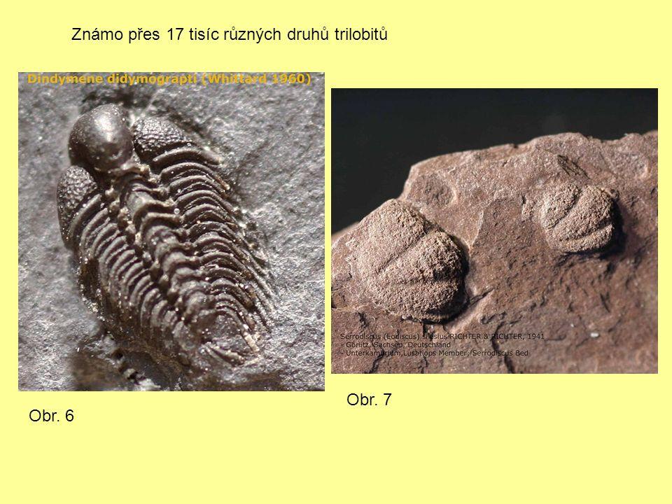 Známo přes 17 tisíc různých druhů trilobitů Obr. 6 Obr. 7