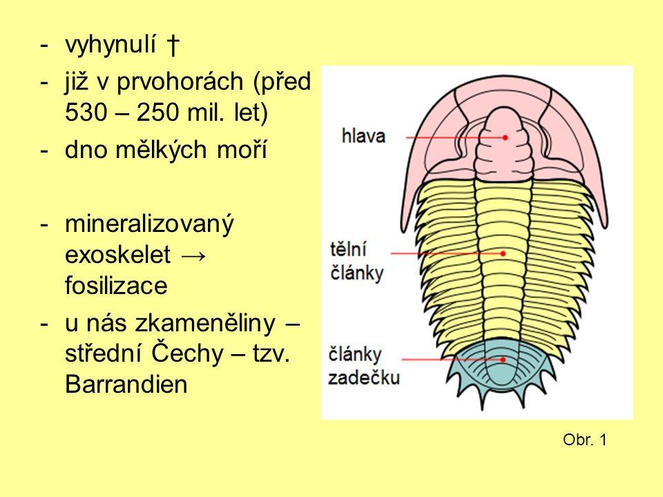 -vyhynulí † -již v prvohorách (před 530 – 250 mil. let) -dno mělkých moří -mineralizovaný exoskelet → fosilizace -u nás zkameněliny – střední Čechy –