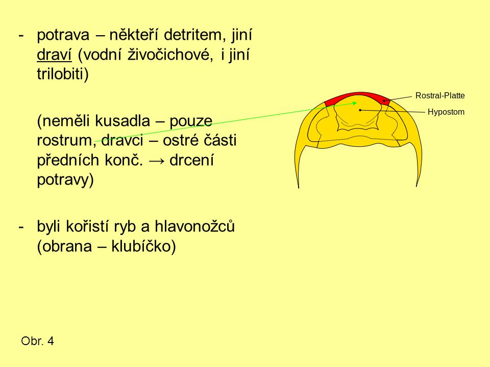 -potrava – někteří detritem, jiní draví (vodní živočichové, i jiní trilobiti) (neměli kusadla – pouze rostrum, dravci – ostré části předních konč. → d