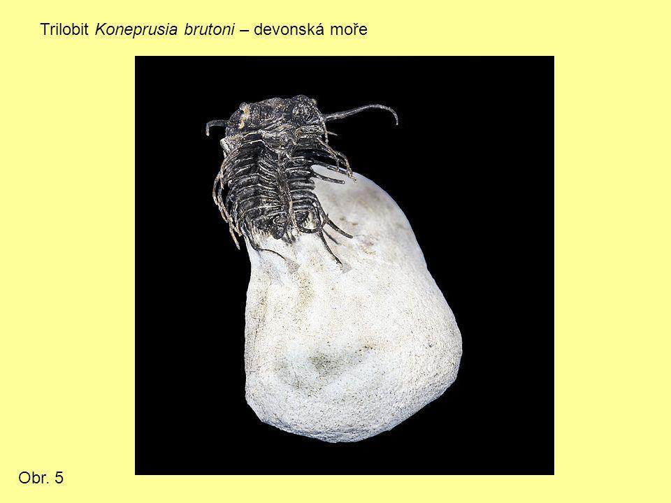 Trilobit Koneprusia brutoni – devonská moře Obr. 5
