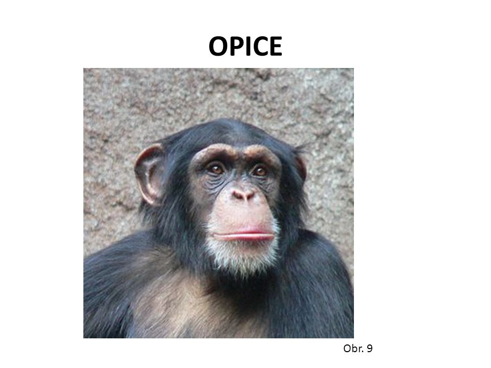 OPICE Obr. 9