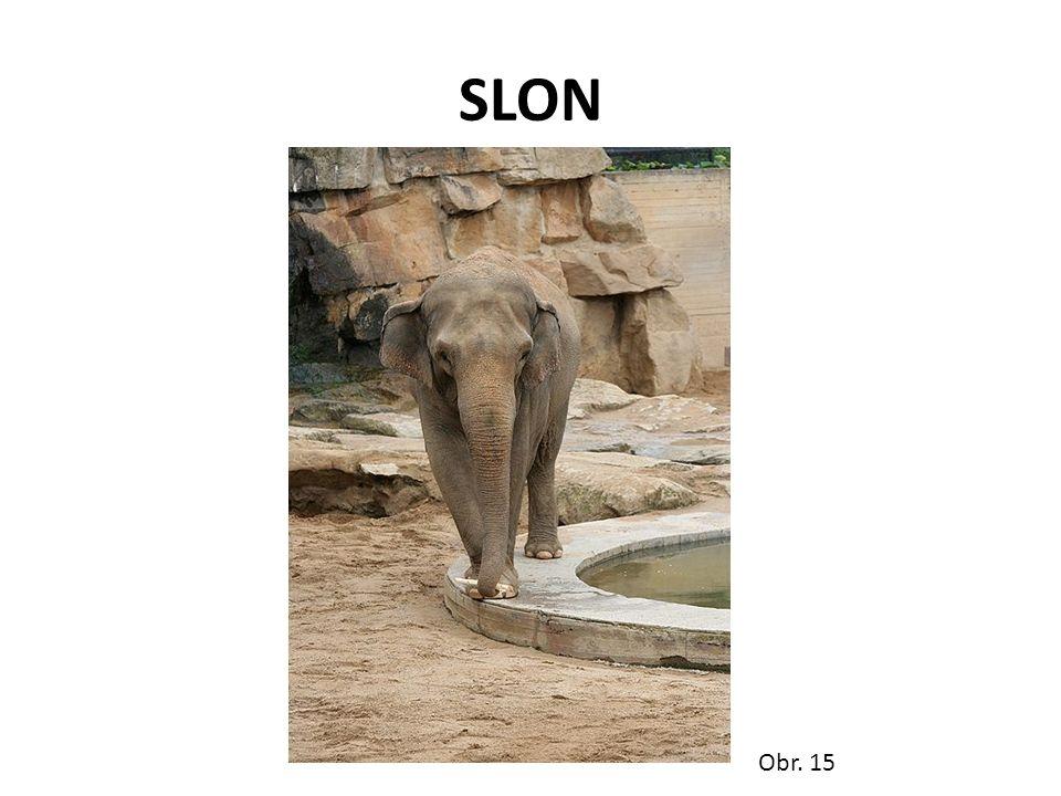 SLON Obr. 15