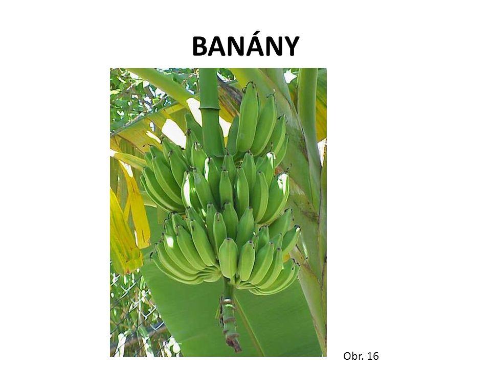 BANÁNY Obr. 16