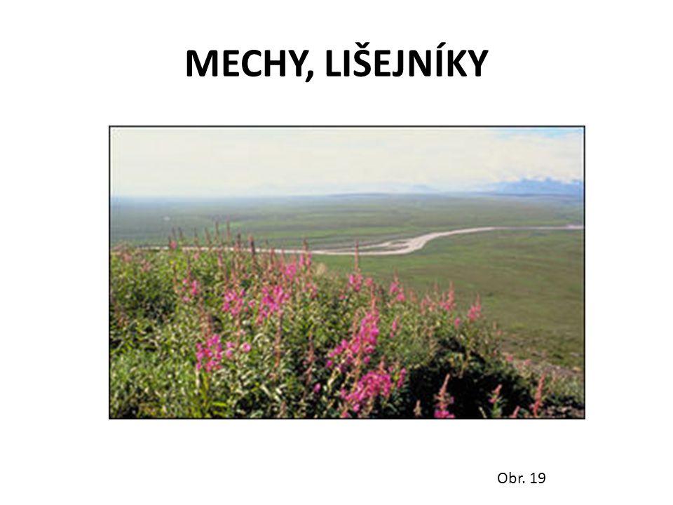 MECHY, LIŠEJNÍKY Obr. 19