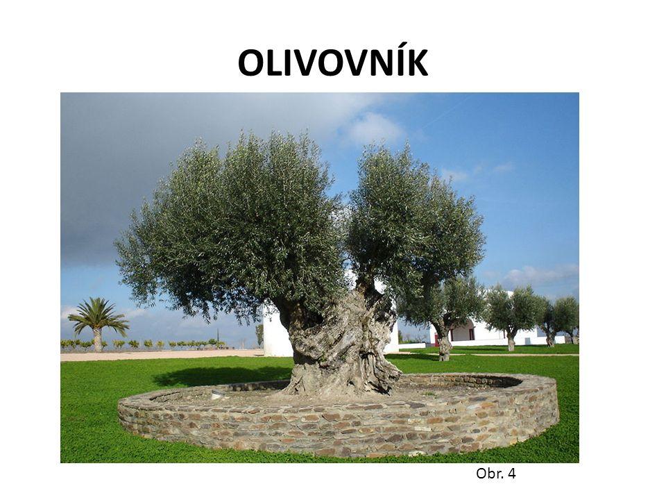 OLIVOVNÍK Obr. 4