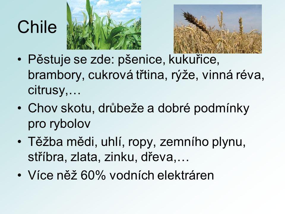 Chile Pěstuje se zde: pšenice, kukuřice, brambory, cukrová třtina, rýže, vinná réva, citrusy,… Chov skotu, drůbeže a dobré podmínky pro rybolov Těžba mědi, uhlí, ropy, zemního plynu, stříbra, zlata, zinku, dřeva,… Více něž 60% vodních elektráren