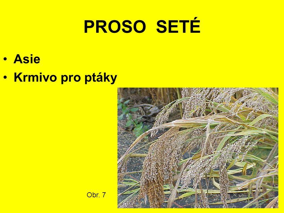 PROSO SETÉ Asie Krmivo pro ptáky Obr. 7