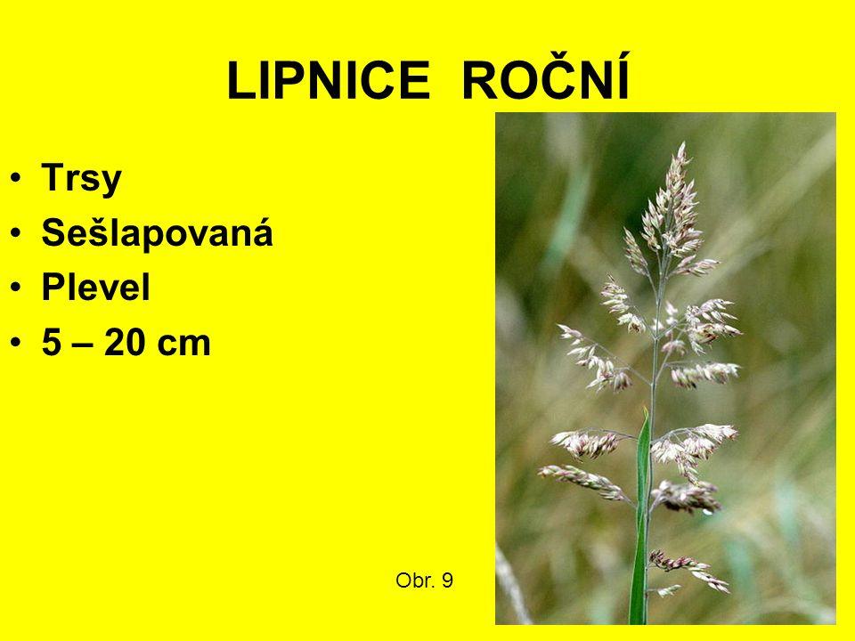 LIPNICE ROČNÍ Trsy Sešlapovaná Plevel 5 – 20 cm Obr. 9