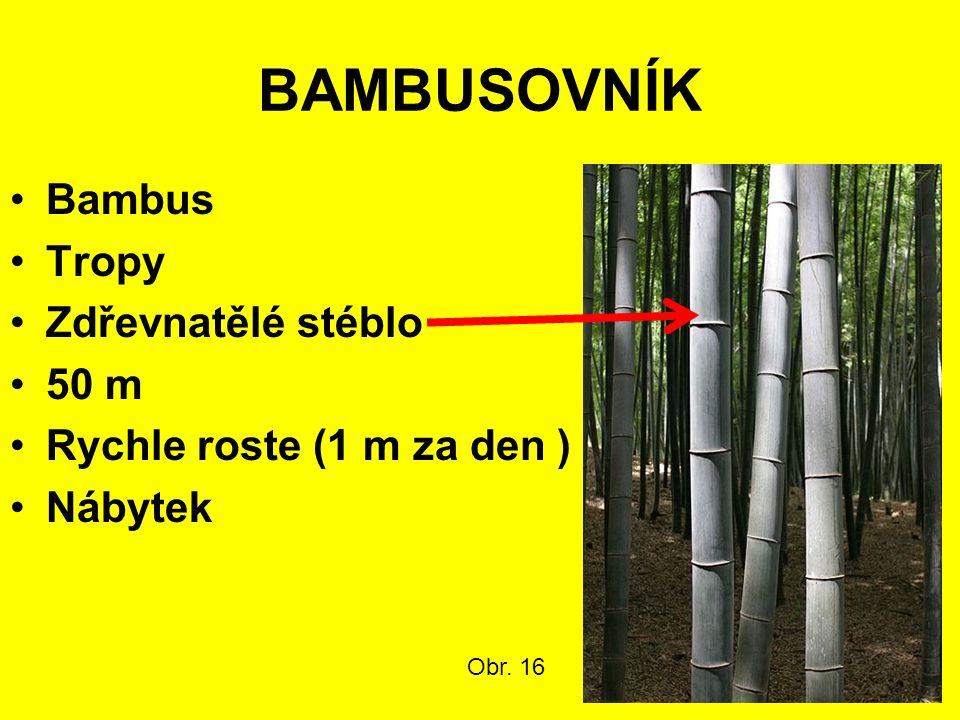 BAMBUSOVNÍK Bambus Tropy Zdřevnatělé stéblo 50 m Rychle roste (1 m za den ) Nábytek Obr. 16