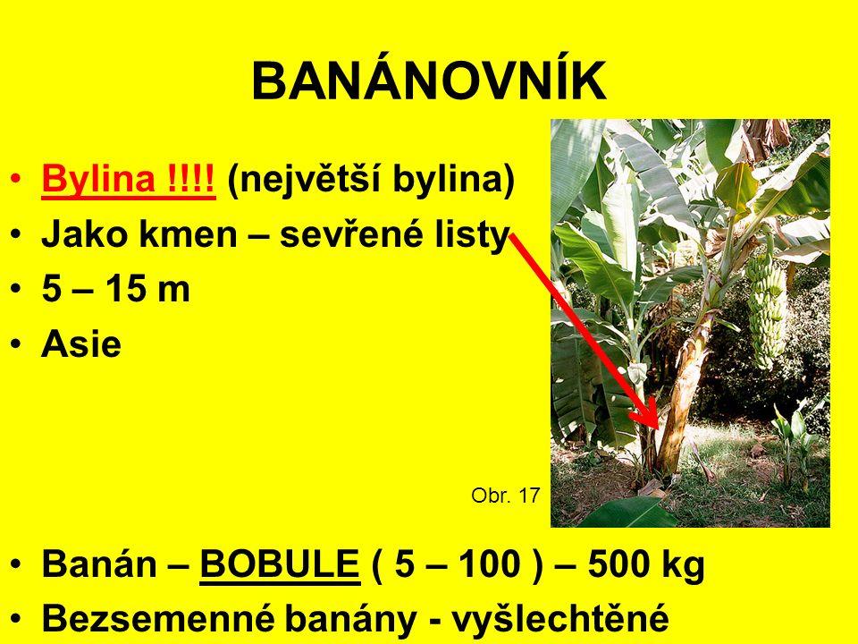 BANÁNOVNÍK Bylina !!!.