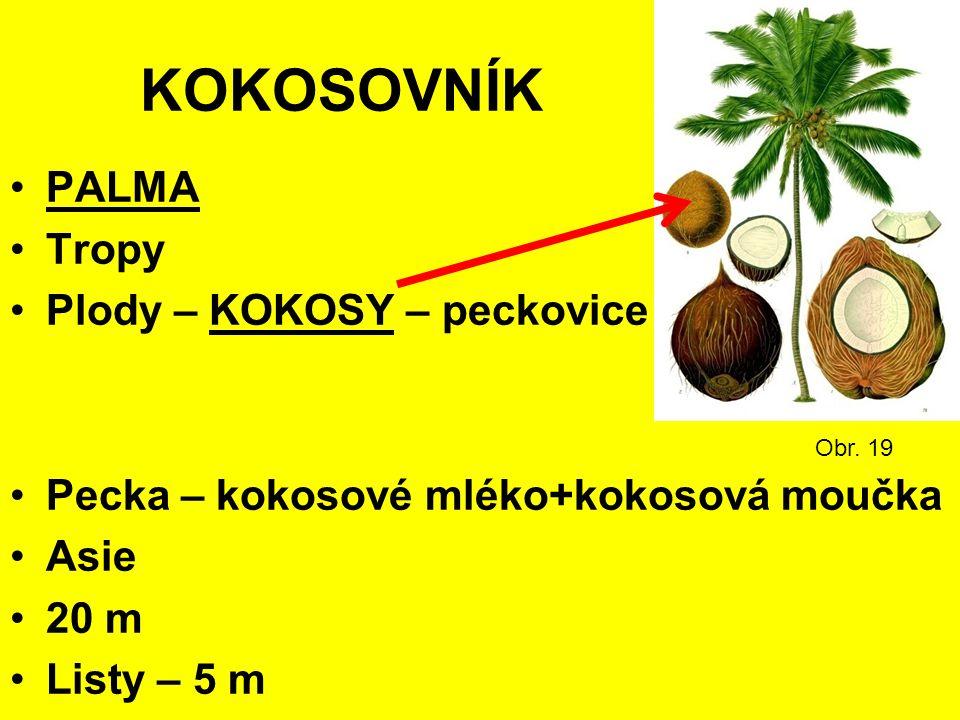 KOKOSOVNÍK PALMA Tropy Plody – KOKOSY – peckovice Pecka – kokosové mléko+kokosová moučka Asie 20 m Listy – 5 m Obr.