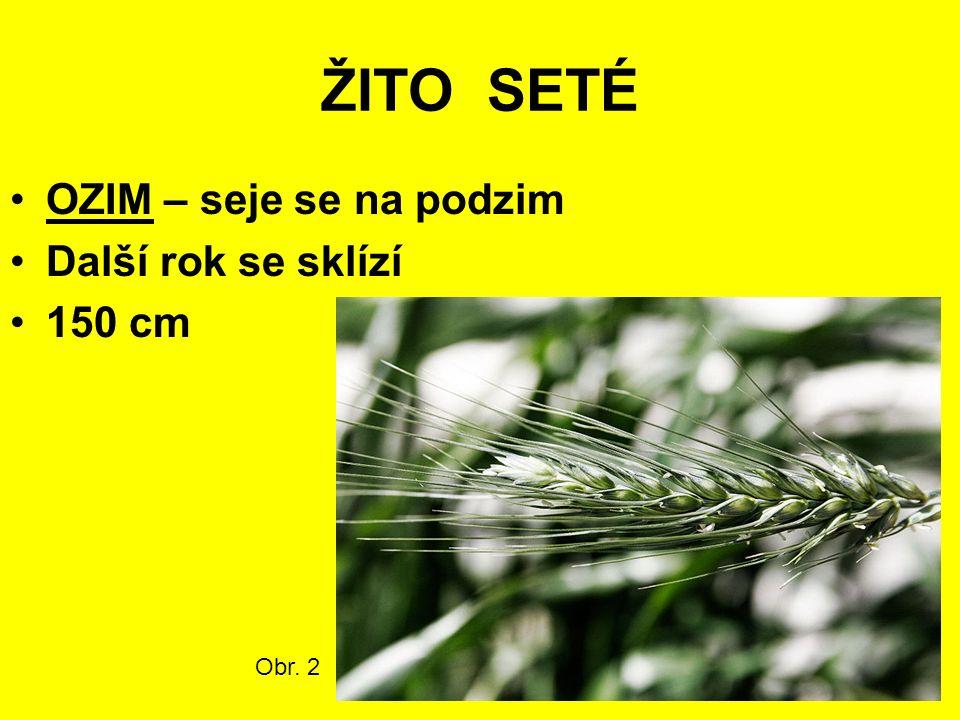 ŽITO SETÉ OZIM – seje se na podzim Další rok se sklízí 150 cm Obr. 2
