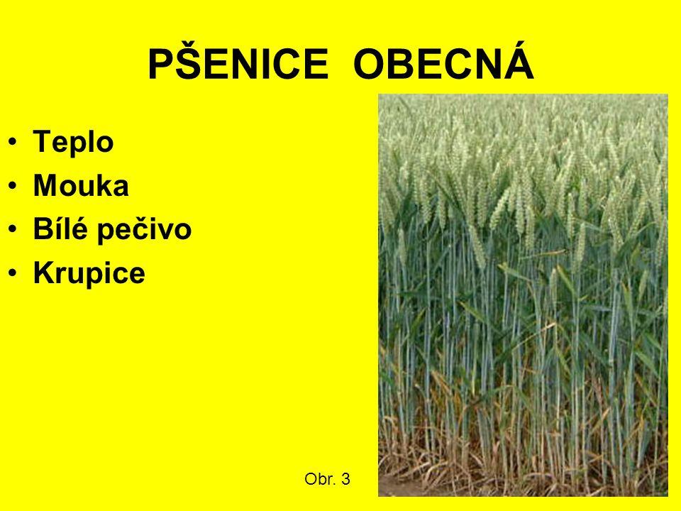 PŠENICE OBECNÁ Teplo Mouka Bílé pečivo Krupice Obr. 3