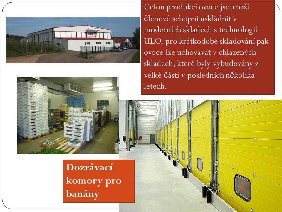 Dozrávací komory pro banány Celou produkci ovoce jsou naši č lenové schopni uskladnit v moderních skladech s technologií ULO, pro krátkodobé skladování pak ovoce lze uchovávat v chlazených skladech, které byly vybudovány z velké č ásti v posledních n ě kolika letech.
