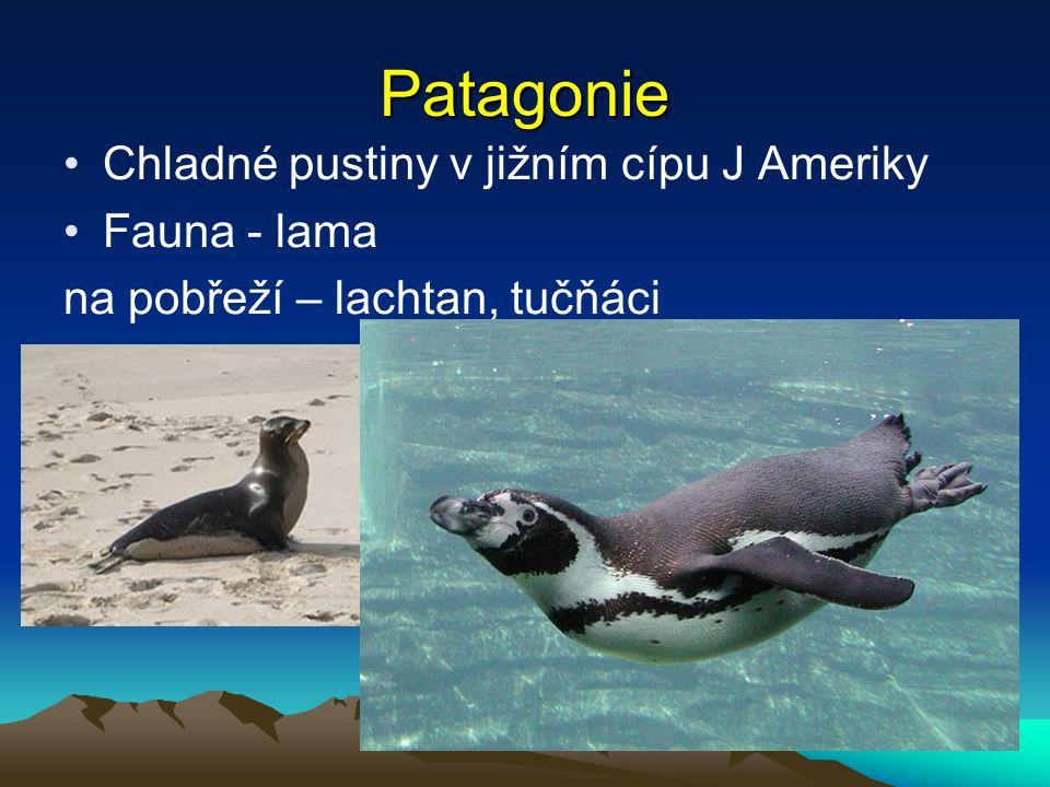 Patagonie Chladné pustiny v jižním cípu J Ameriky Fauna - lama na pobřeží – lachtan, tučňáci